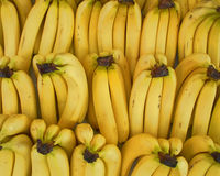 Fresh yellow bananas rows Royalty Free Stock Photo