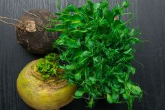 Fresh yellow and black turnip with green pea tendrils. Turnip, green pea tendrils in black wood Stock Image