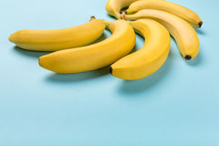 Fresh yellow bunch of bananas isolated on blue, ripe bananas Royalty Free Stock Photography