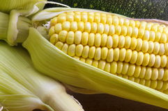 Fresh yellow corn cob. Next to corn leaves Stock Photography