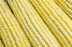 Fresh yellow corn cobs close up Stock Photos