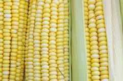 Fresh yellow corn cobs close up Royalty Free Stock Photos