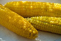 Fresh yellow corn. Row of delicious boiled fresh corn cobs for a healthy snack. stock images