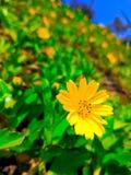 Fresh yellow flower. The beautyfull flower on the ground Stock Photo