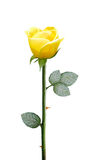 Fresh yellow flower Stock Photography