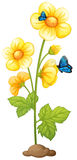Fresh yellow flowers with butterflies Stock Image