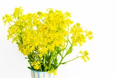Fresh yellow flowers stand in a vase on a white background. Spring bouquet. stock photo