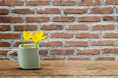 Fresh yellow flowers in white cup with heart shaped holder on grunge wooden table on old grunge vintage brick wall. Love concept royalty free stock photo