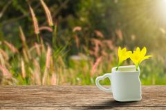 Fresh yellow flowers in white cup with heart shaped holder on grunge wooden tabletop on blurred grass flowers field in garden Stock Images