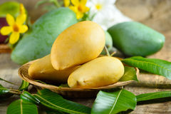 Fresh yellow and green mango on wooden. Background Stock Photo