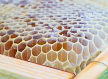 Fresh yellow honeycomb close-up Stock Images