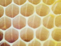 Fresh yellow honeycomb close-up Royalty Free Stock Photo