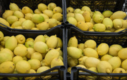Fresh, yellow, juicy lemons. In boxes Royalty Free Stock Photo