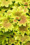 Fresh yellow leaf Stock Image