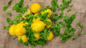 Fresh yellow lemons and green salad on a canvas Royalty Free Stock Photo