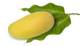 Fresh Yellow mango isolated on a white background. Yellow mango ,thai fruit favorite isolated on a white background Stock Photography