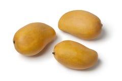 Fresh yellow mangos Stock Photos