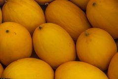 Fresh yellow melons after harvest royalty free stock photos
