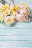 Fresh yellow narcissus flowers  and decorative heart on turquois Royalty Free Stock Photos