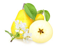 Fresh yellow-orange pears with green leaf Stock Images