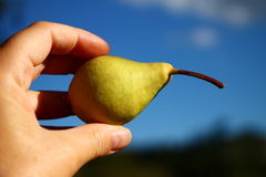 Fresh yellow pear in hand with blue sky in background Royalty Free Stock Photography