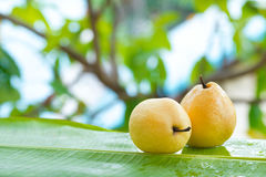 Fresh yellow pear tropic fruit summer outdoors Royalty Free Stock Images