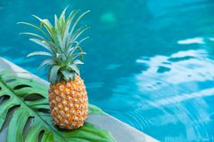 Fresh yellow pineapple tropic fruit summer refreshment near pool Royalty Free Stock Photography