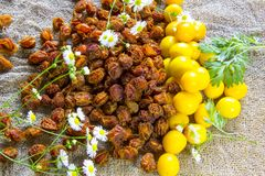Fresh yellow plum berries and Dried orange plum berrieson a white plate. White daisy flowers and a green wormwood branch. Royalty Free Stock Photos