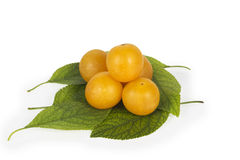 Fresh yellow plums on green leaves Royalty Free Stock Photo