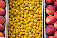 Fresh yellow plums and nectarines selling in a market Stock Photography