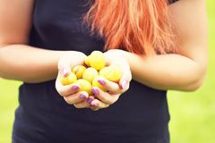 Fresh yellow plums. Ripe fruits in a hands. royalty free stock photography