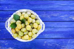 Fresh yellow plums. Ripe fruits in a plate on blue boards background royalty free stock images