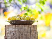 Fresh yellow plums. Ripe fruits in a plate on tree stump. In a summer garden royalty free stock photography