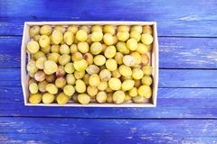 Fresh yellow plums. Ripe fruits in a wooden box on blue boards background. Fresh yellow plums. Ripe fruits in a wooden box on blue boards background stock image
