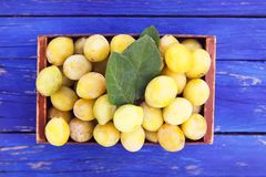 Fresh yellow plums. Ripe fruits in a wooden box on blue boards background. stock images