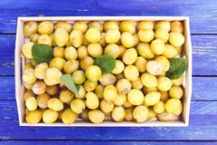 Fresh yellow plums. Ripe fruits in a wooden box on rough boards. Fresh yellow plums. Ripe fruits in a wooden box on blue boards background stock images