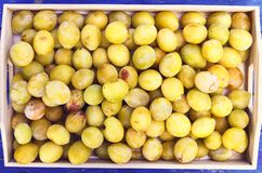 Fresh yellow plums. Ripe fruits in a wooden box on blue boards background. Fresh yellow plums. Ripe fruits in a wooden box on blue boards background royalty free stock photography
