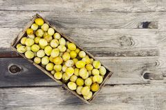 Fresh yellow plums. Ripe fruits in a wooden box on boards background. Fresh yellow plums. Ripe fruits in a wooden box in summer garden royalty free stock image