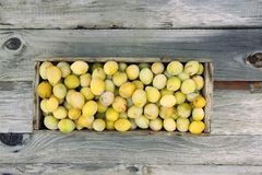 Fresh yellow plums. Ripe fruits in a wooden box on boards background stock photos