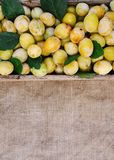 Fresh yellow plums. Ripe fruits in a wooden box on rough burlap surface. Fresh yellow plums. Ripe fruits in a wooden box on burlap rough natural background stock photos