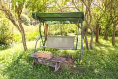 Fresh yellow plums. Ripe fruits in a wooden box on garden swing in sunny summer day stock photography