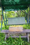 Fresh yellow plums. Ripe fruits in a wooden box on garden swing in sunny summer day stock images