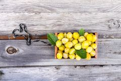 Fresh yellow plums. Ripe fruits in a wooden box on green summer grass. In a garden stock photography