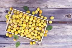 Fresh yellow plums. Ripe fruits in a wooden box on rough boards background stock photos