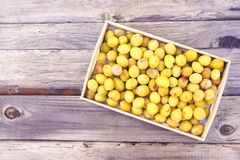 Fresh yellow plums. Ripe fruits in a wooden box on rough boards background stock image