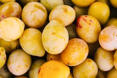 Fresh yellow plums. Ripe fruits in a wooden box in summer garden stock photo