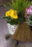 Fresh yellow primrose Royalty Free Stock Image