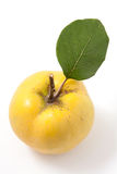 Fresh yellow quince Royalty Free Stock Photo