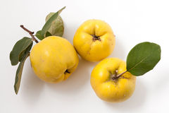Fresh yellow quinces Stock Photography