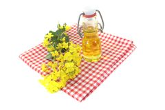 Fresh yellow Rapeseed oil Royalty Free Stock Photo